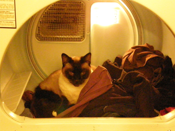 gus-in-the-dryer